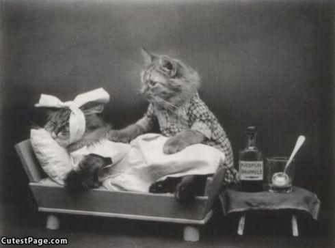 Cat_Doctor